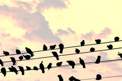 Birds perched on electric media in the morning. Stock Images