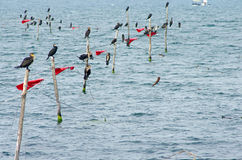 Birds perched on nets into the sea Royalty Free Stock Images