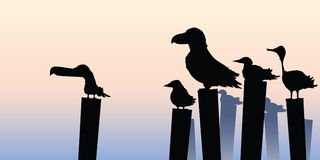 Birds Perched on Posts Stock Image