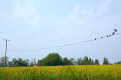 Birds perched on wires Royalty Free Stock Photography
