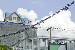 Birds perched on wires. Stock Image