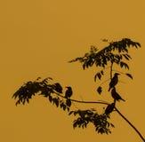 Birds perching at a tree Stock Photos