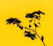 Birds perching at a tree Royalty Free Stock Photos
