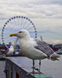 Birds of Pier 57 Stock Image