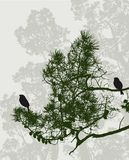 Birds in the pine forest Royalty Free Stock Photos
