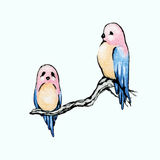Birds with a pink heads Royalty Free Stock Images
