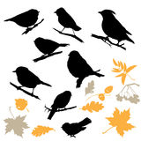 Birds and Plants Silhouettes Stock Photos