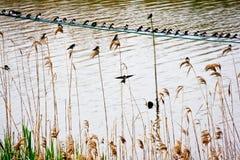 Birds playing Stock Photo