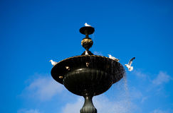 Birds playing water on fountain royalty free stock photos