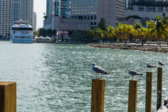Birds pole miami. Birds standing on pole port miami Stock Photos