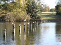 Birds and poles Stock Photos