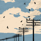 Birds and poles. Birds on wire, romantic background Royalty Free Stock Photos