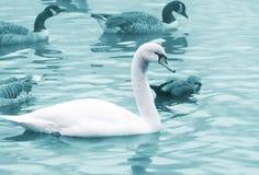 Birds in the pond Stock Photo