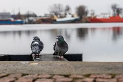 Birds on the port wharf. A pigeon sitting on the shore in the Pa royalty free stock photo