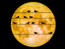 Birds on power electric line super full moon Royalty Free Stock Image