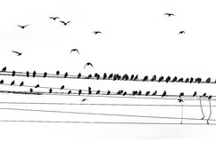 Birds on power line. Birds sitting on power line, flying, black and white Royalty Free Stock Image