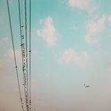 Birds on power line cable against blue sky with clouds backgroun Royalty Free Stock Image