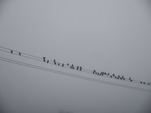 Birds on a power line in the fog. Stock Image