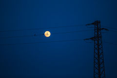 Birds on a power line, profiled against sky and rising full moon Stock Images
