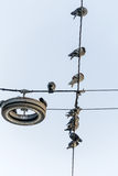 Birds on power line Stock Photos