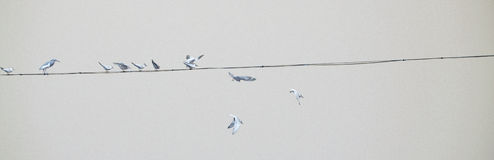 Birds on a power line. Taking off Royalty Free Stock Image