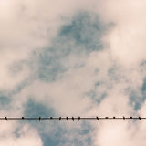 Birds on power line wire against blue sky Stock Photos