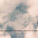 Birds on power line wire against blue sky Stock Photos