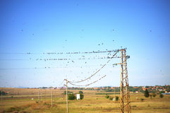 Birds on power lines Royalty Free Stock Photography