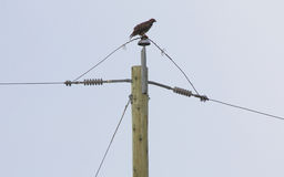 Birds and Power Lines Royalty Free Stock Photos