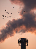 Birds before a power plant. A flock of birds flies in front of a chimney of a power plant on a sunny morning Stock Photos