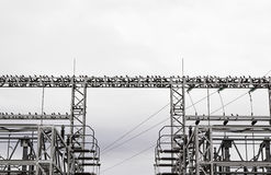 Birds power tower Stock Photography