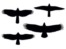 Birds of pray. Silhouettes. Vector eps8 Royalty Free Stock Photography