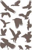 Birds predator. Isolated silhouettes of bird predator on the white background Royalty Free Stock Image