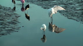 Birds preening and feeding at low tide Stock Photo