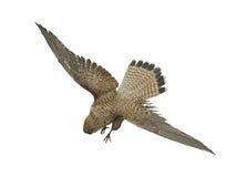 Birds of prey royalty free stock photos