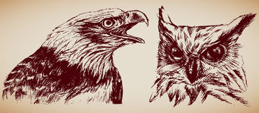 Birds of Prey. Hand-drawn birds of prey: Eagle and Owl Stock Image