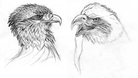 Birds of Prey drawing. Drawing of two Eagles. Pencil on paper Stock Images