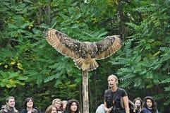 Birds of prey exhibition. Exhibition of birds in the monastery of stone stock photos