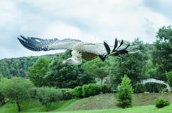 Birds of prey Royalty Free Stock Photo
