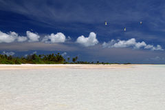 Birds and puffy clouds over wild palm beach. Wild tropical beach, Kiritimati Island, Kiribati Stock Photos