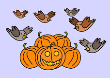 Birds and pumpkins Stock Photography