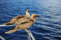Birds on the railing of the yacht. stock images