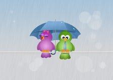 Birds in the rain Stock Photos