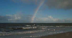 Birds with Rainbow on North Frisian Island Beach of Amrum stock video