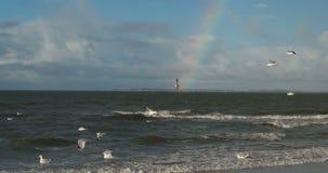 Birds with Rainbow on North Frisian Island Beach of Amrum stock video footage