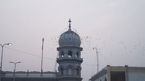 Birds on Religious Place Stock Image