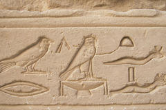Birds and reptiles at hieroglyphics Royalty Free Stock Images