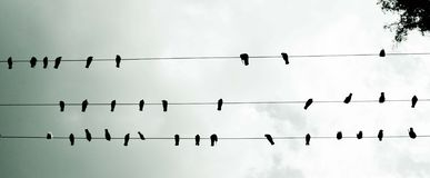 Birds rested on power lines, bottom view royalty free stock photo