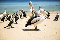 Birds resting on the beach Stock Photos
