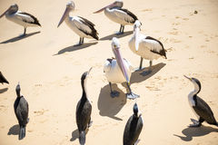 Birds resting on the beach Stock Images